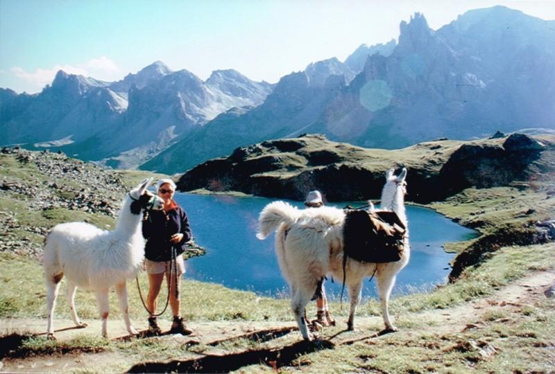 Balade avec les lamas