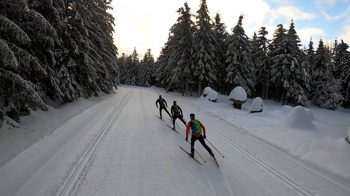 ski de fond en foret